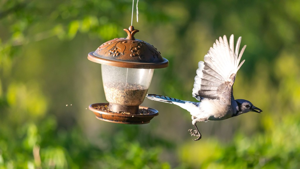 what time of day are birds most active at feeders
