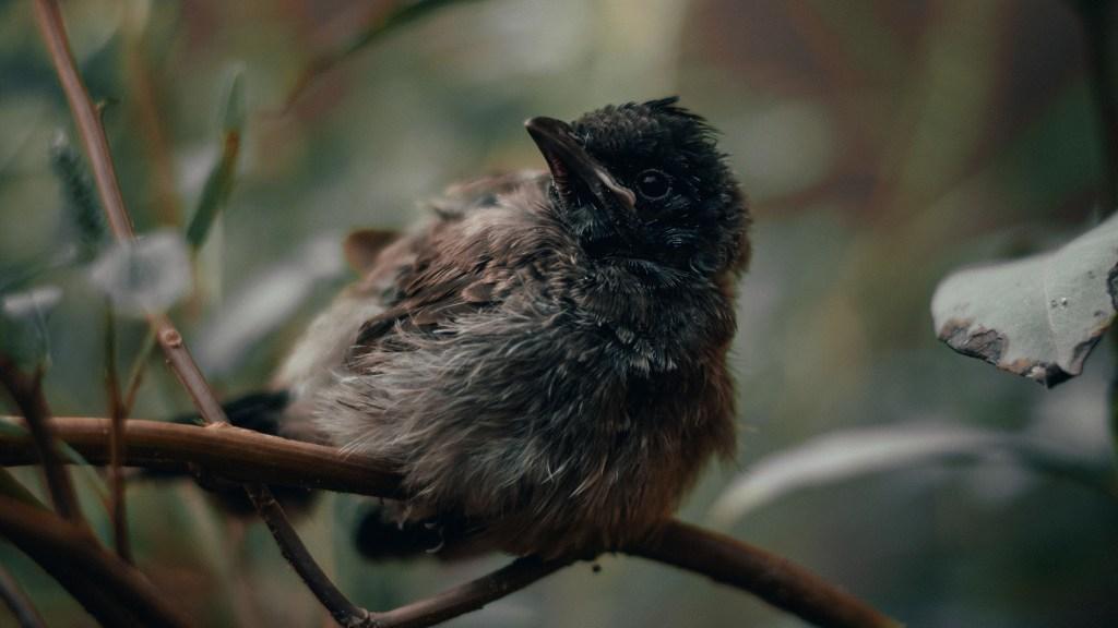 baby birds stay dry in the rain