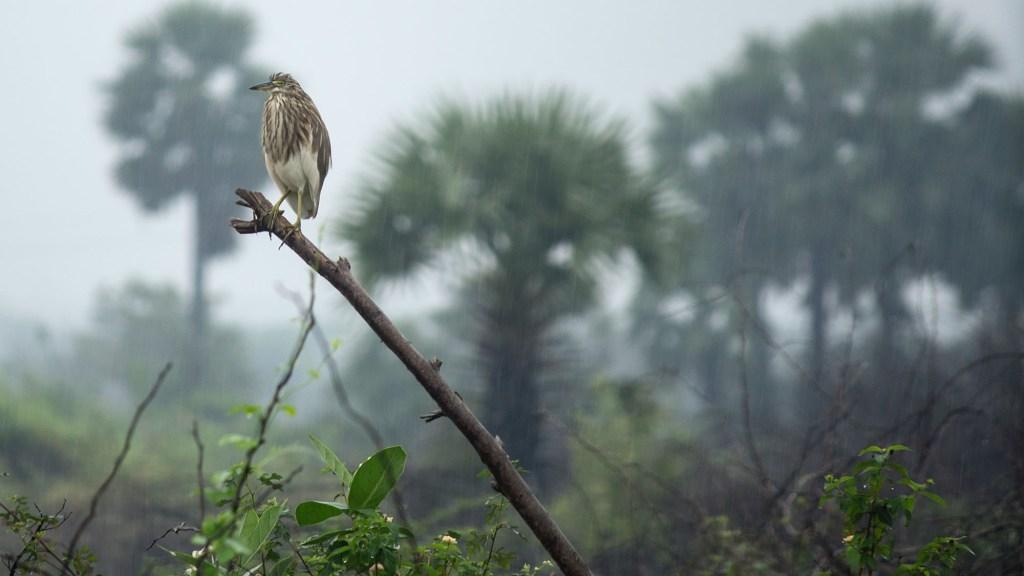 where do birds sleep when it rains