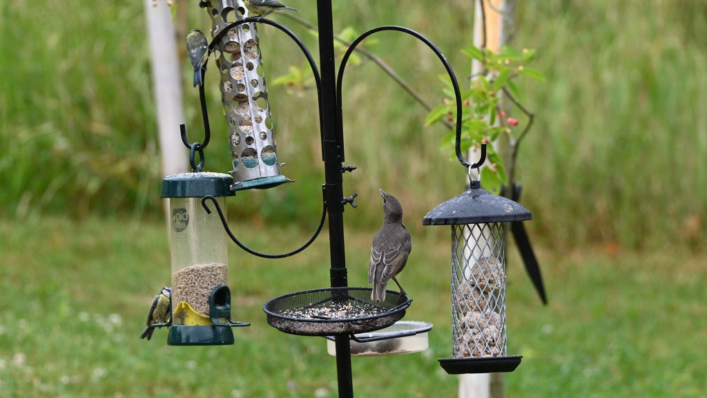how to hang a bird feeder without a tree