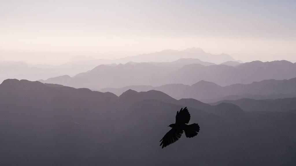 where do birds go when it's windy