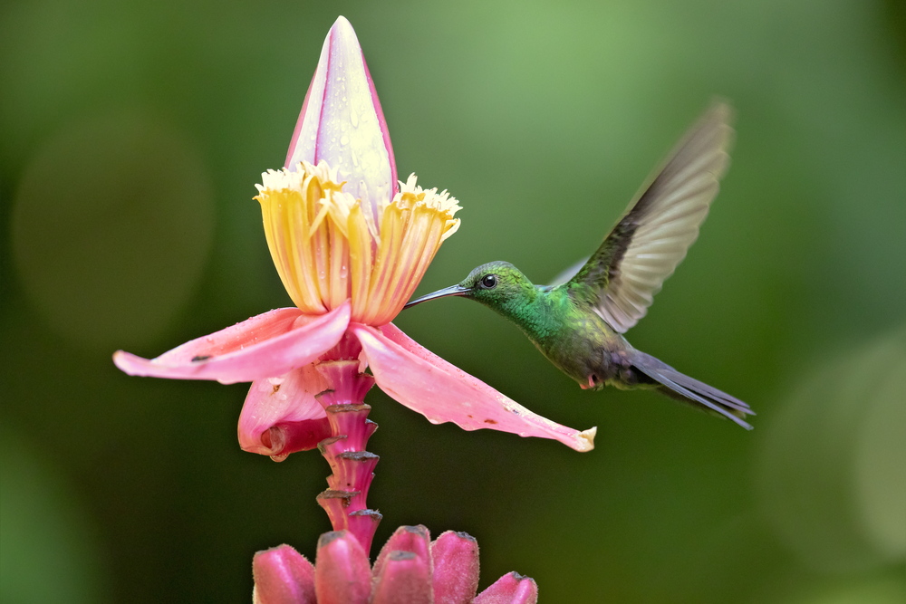 20 Types Of Flowers That Attract Hummingbirds Birdwatching Tips
