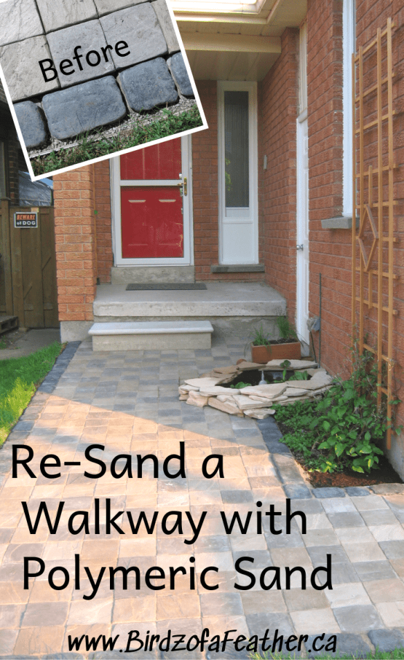 Re-sand a walkway using Polymeric sand to fill the joints between pavers. We've got all the tips and tricks. Birdz of a Feather | re-sand walkway | curb appeal | polymeric sand | front walkway ideas | front walkway landscaping | pavers | patio ideas #frontwalkway #birdzofafeather.ca #pavers #diy #landscape #patiopavers #walkways #patio