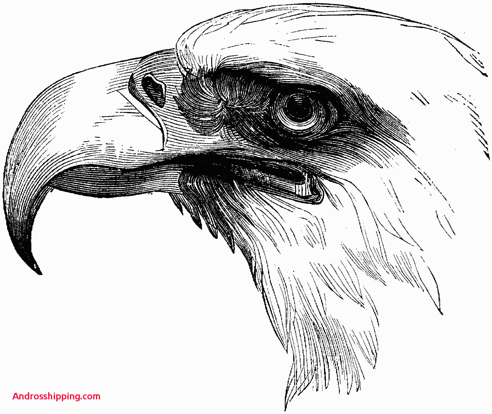 - Bald Eagle Coloring Page 15 Lovely Bald Eagle Coloring Page