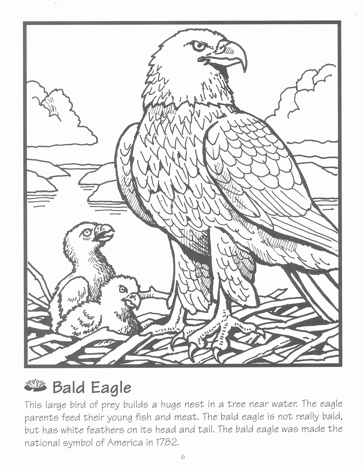 - Bald Eagle Coloring Page Bald Eagle Coloring Page Inspirational