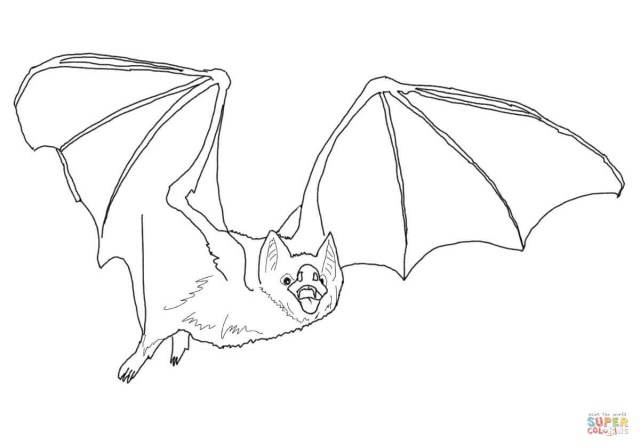 Bat Coloring Pages Common Vampire Bat Coloring Page Free Printable Pages And Wuming