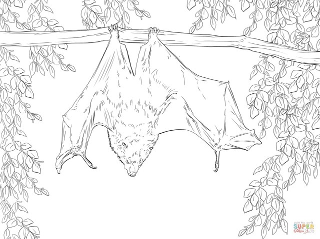 Bat Coloring Pages Realistic Bat Coloring Pages Futurama
