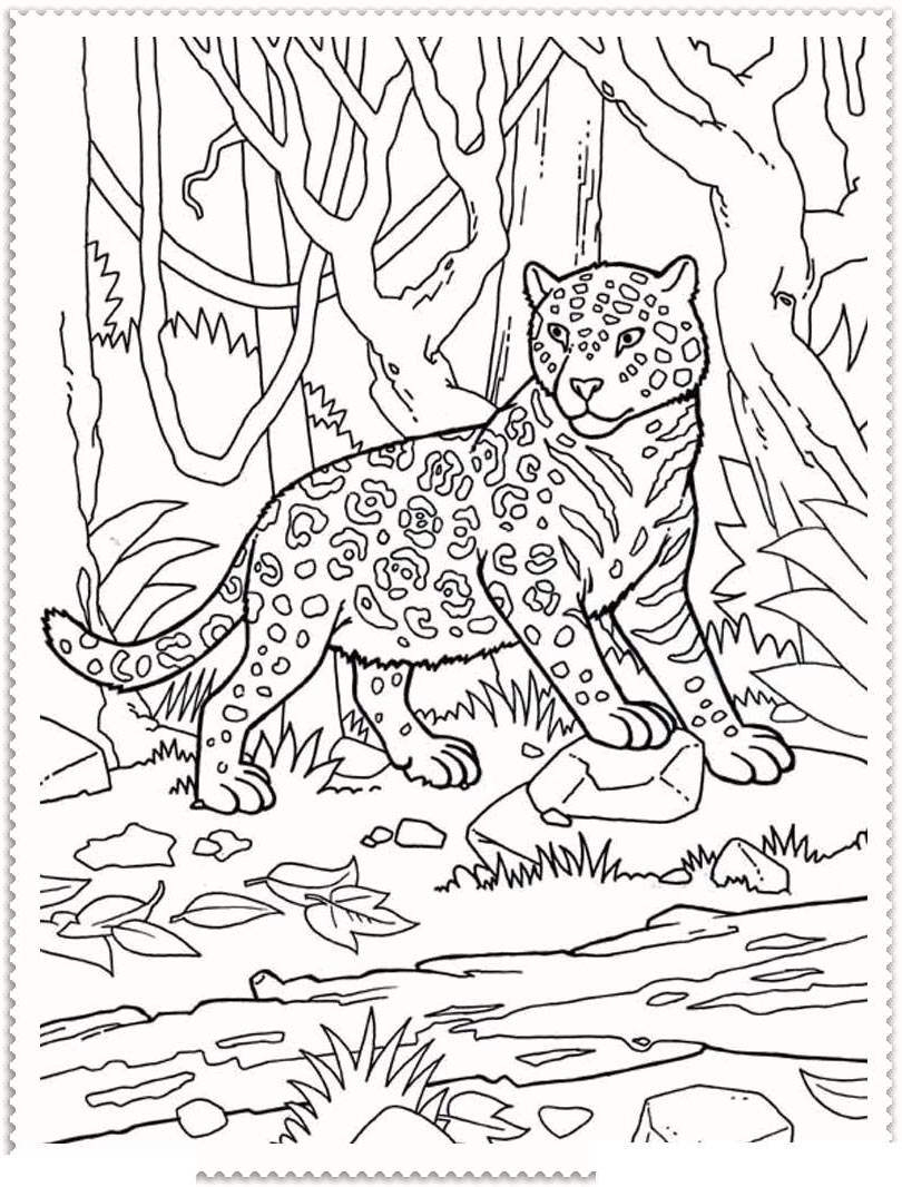 Free Printable Animal Coloring Pages Coloring Pages Jungle Animaloloring Pages Animals Drawing Pictures