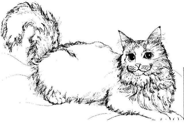 Kitty Cat Coloring Pages Warriors Cats Coloring Pages 11 Kitty Cat Coloring Pages