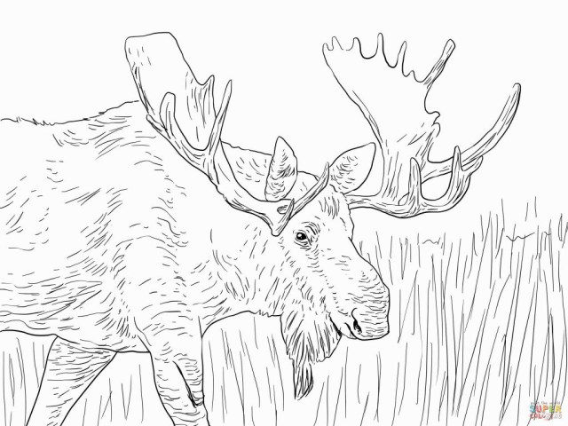 Moose Coloring Pages Moose Coloring Pages Coloring Pages