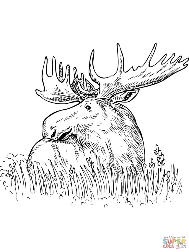 Moose Coloring Pages Moose Coloring Pages Printable Kids Coloring Page