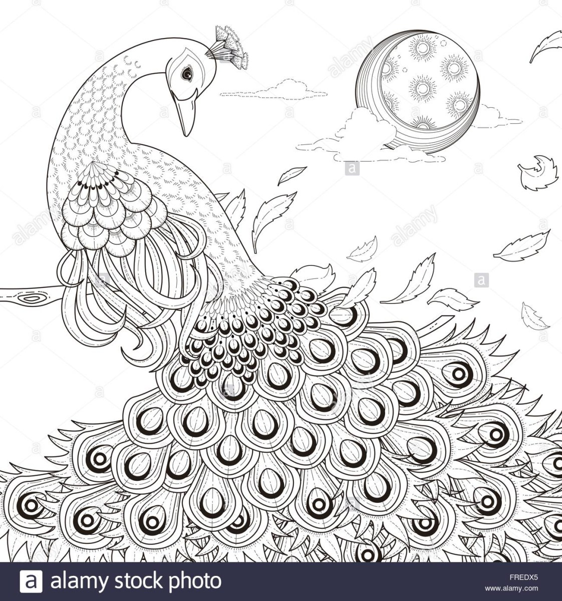 Peacock Coloring Pages Simplistic Peacock Coloring Page Peacocks