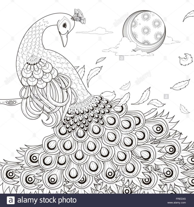 Peacock Coloring Pages Simplistic Peacock Coloring Page Peacocks Pages Free Abkerrink