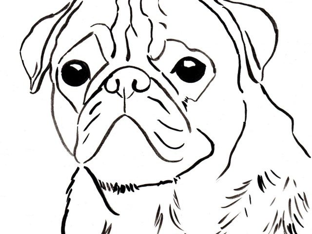 Pug Coloring Pages Beautiful Chinese Pug Coloring Pages Puppy Samzuniss Com Colouring