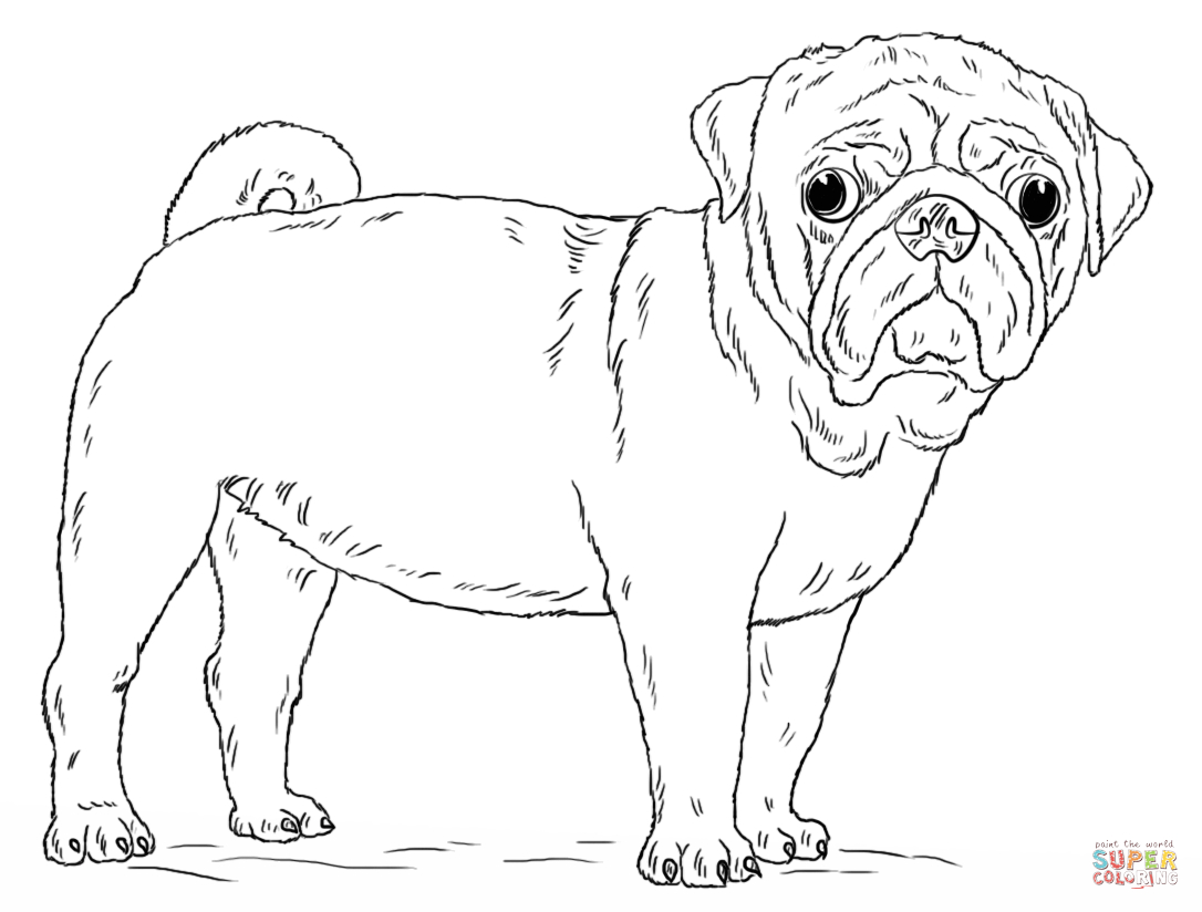 Pug Coloring Pages Cute Pug Dog Coloring Page Free Printable