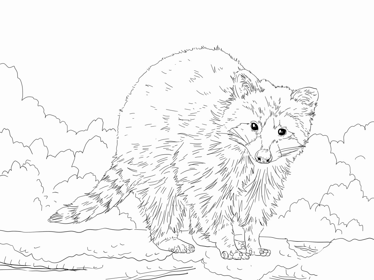 Raccoon Coloring Page Raccoon Pictures To Print Lovely Raccoon Coloring Page Coloring