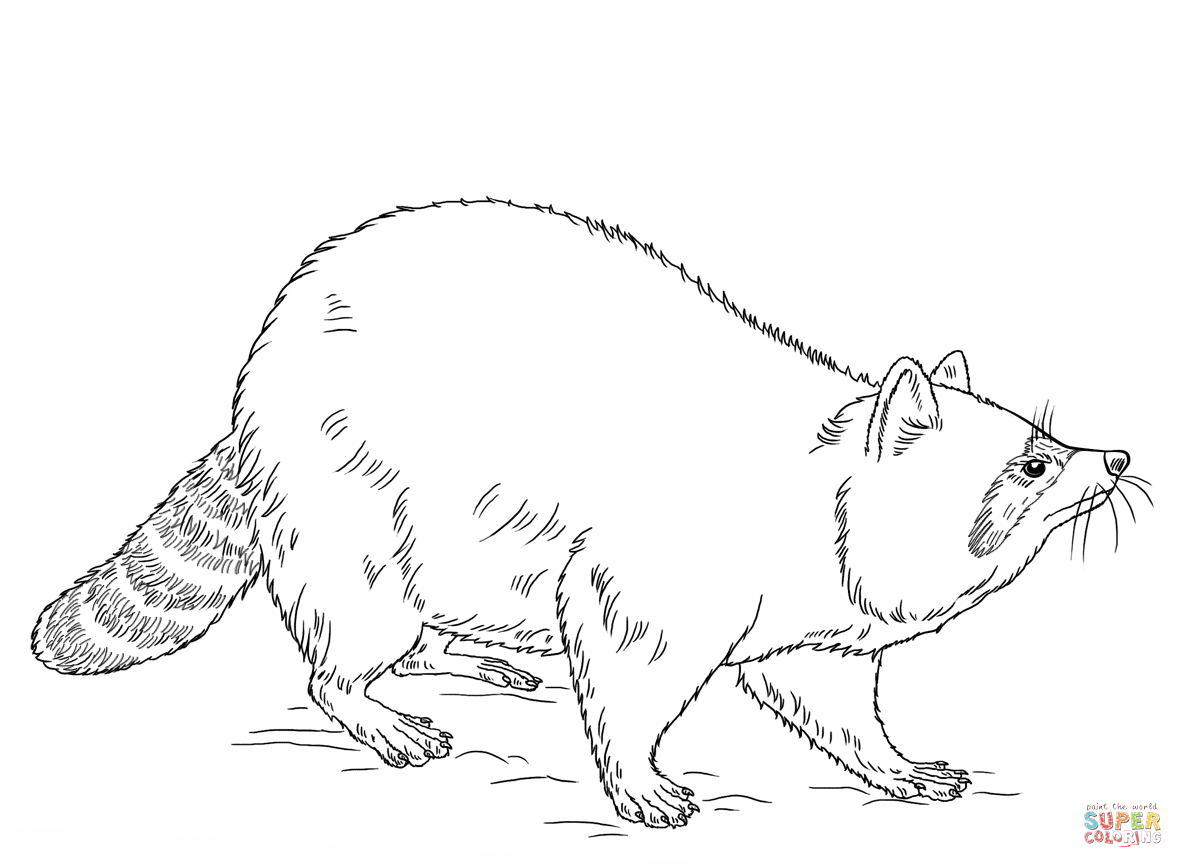 25+ Inspiration Picture of Raccoon Coloring Page - birijus.com