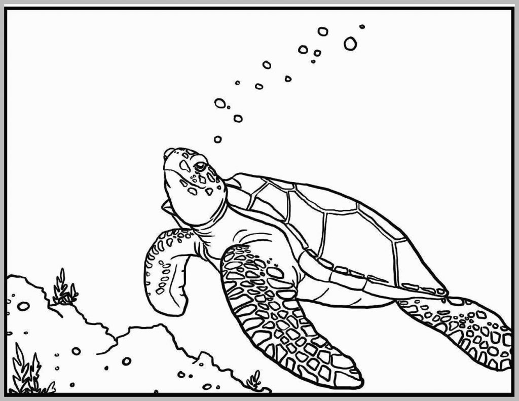 Sea Turtle Coloring Page Coloring Pages Printable Starfishring Page Small Sea Turtle For