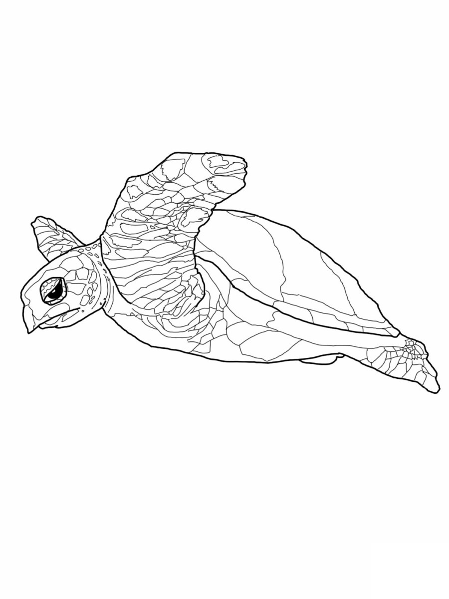 Sea Turtle Coloring Page Free Printable Sea Turtle Coloring Pages At Getdrawings Free