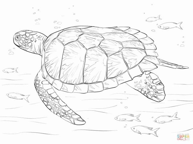 Sea Turtle Coloring Page Sea Turtle Coloring Page Beautiful Sea Turtle Coloring Page To Print