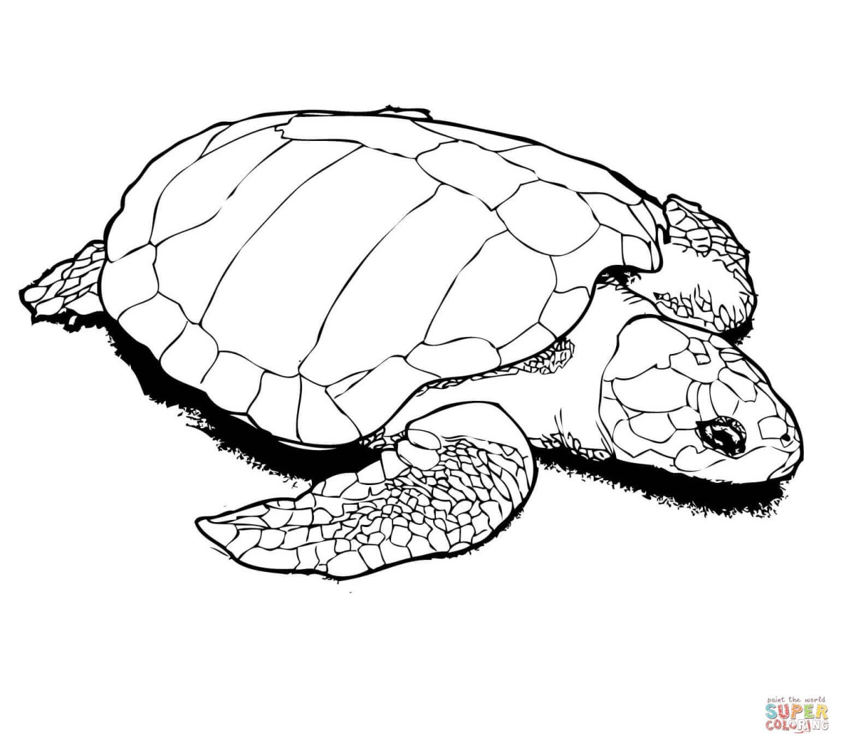 Sea Turtle Coloring Page Turtles Coloring Pages Free Coloring Pages