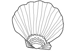 Seashell Coloring Pages Free Printable Seashell Coloring Pages For Kids