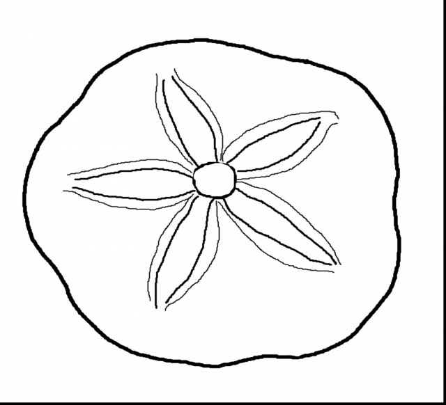 Seashell Coloring Pages Outstanding Sand Dollar Clip Art With Seashell Coloring Pages