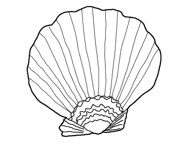 Seashell Coloring Pages Sea Shells Coloring Page J3kp Free Printable Seashell Coloring Pages