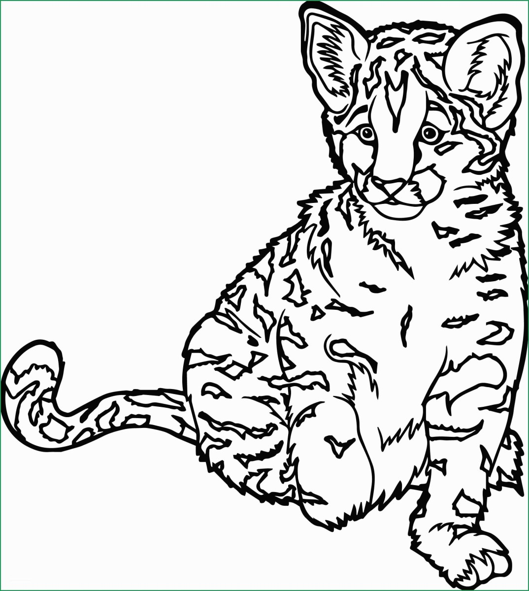 Wild Animals Coloring Pages - Name and Sound - Learning Animal for ... | 1200x1074