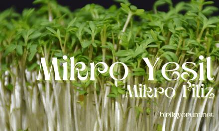 Mikro Yeşil – Mikro Filiz – Saksı Tarımından Gelen Makro Sağlık