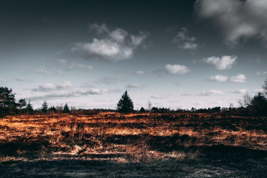 Orman Nefestir