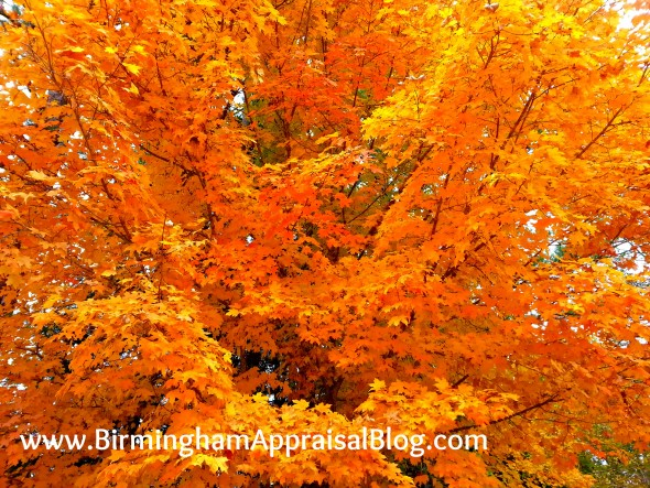 Birmingham fall leaves