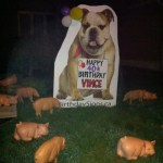 Bulldog Lawn Sign with Pigs Lawn Ornaments