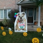 Bull Dog with some Smiley Faces Lawn Signs