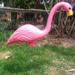 plastic pink flamingos guelph