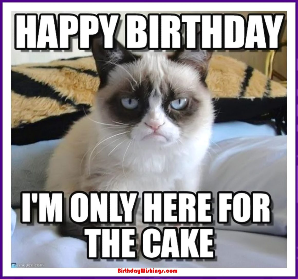 Funny Happy Birthday Memes With cats, Dogs & Funny Animals - photo#48