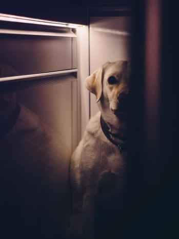 dog animal hiding pet