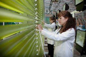 Para Peneliti Universitas Swansea sedang bekerja dengan sampel ganggangnya