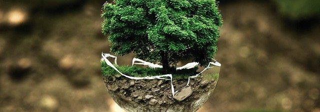 Eco Enzyme: Mudah dan Nol Rupiah