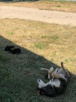 Die Hunde der Unterkunft konnen frei herumlaufen