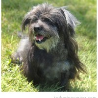 Fallston Animal Rescue Movement, Inc. — Part XIII – Rescue dogs in need of furever homes