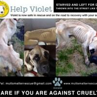 Help: Saving Violet