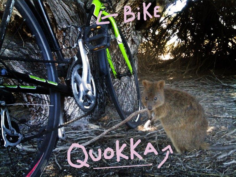 015-quokka-and-bike