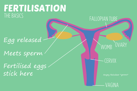Trying to conceive masturbation after sex