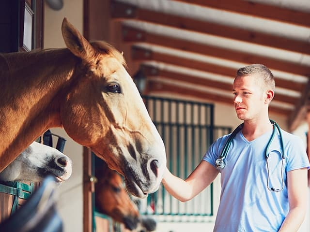 Horse Transport to and from your veterinary practice