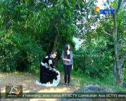 Nayla dan Ratu Macan GGS Episode 425