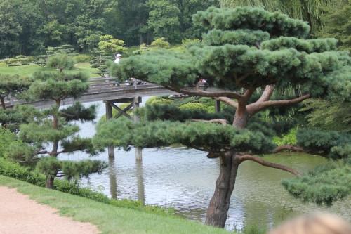 Botanic Garden Japanese Trees