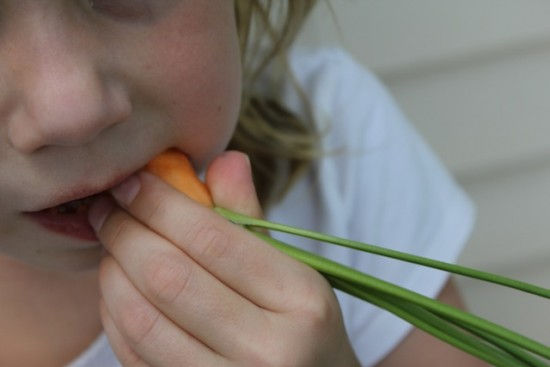 M with Carrot