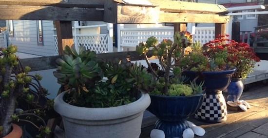 Sausalito Succulents 4