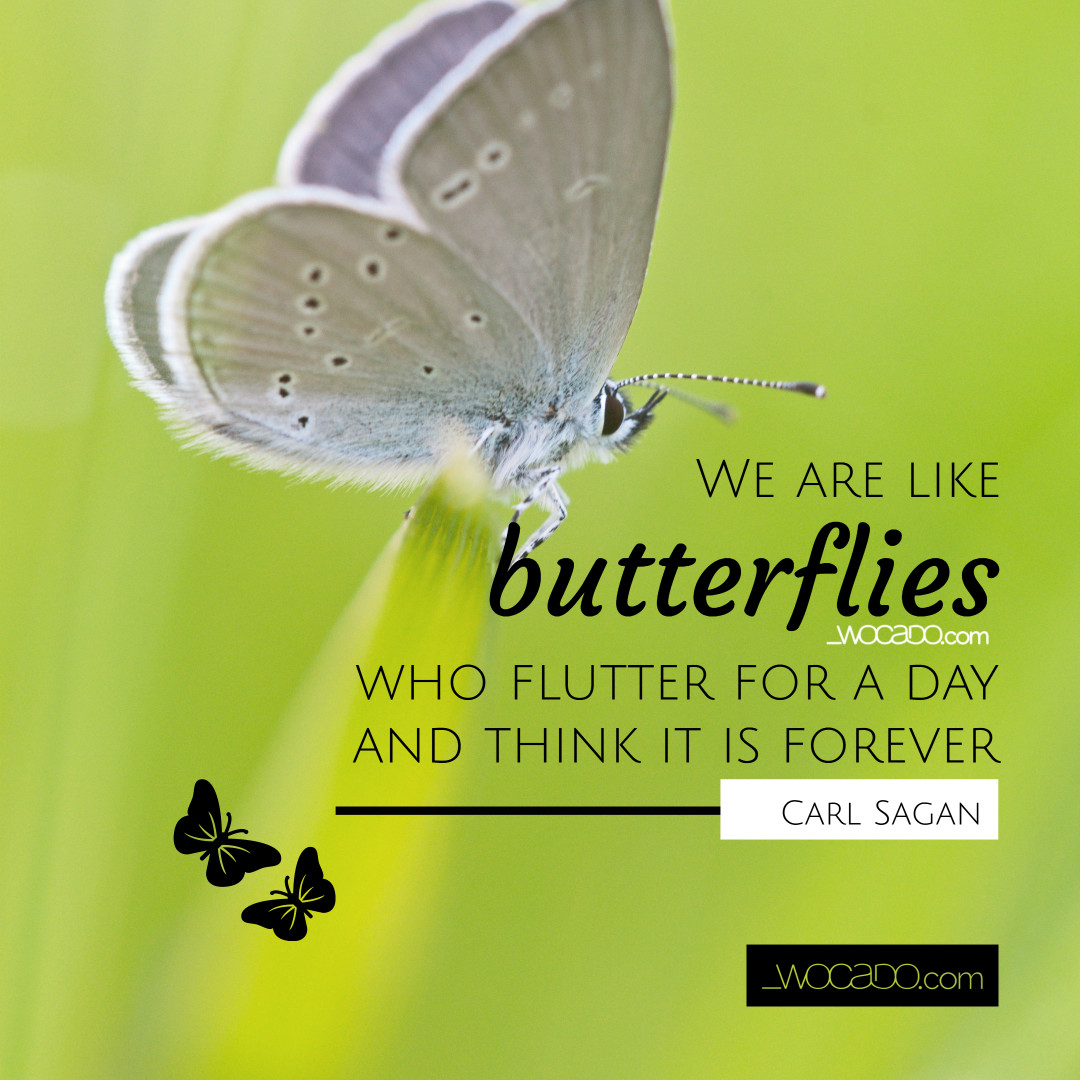 We Are Like Butterflies - Carl Sagan Quote